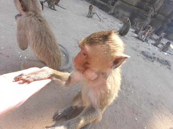 Lopburi (Monkey city)