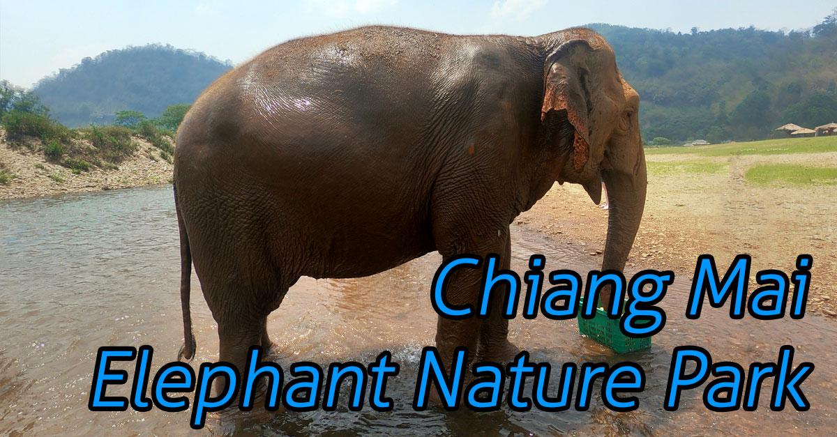 Elephant Nature Park - Ethically See Elephants in Chiang Mai (And What Really Goes On There)