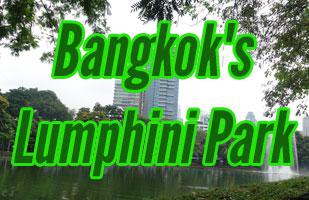 Exploring Bangkok's Lumpini Park and The Monitor Lizards