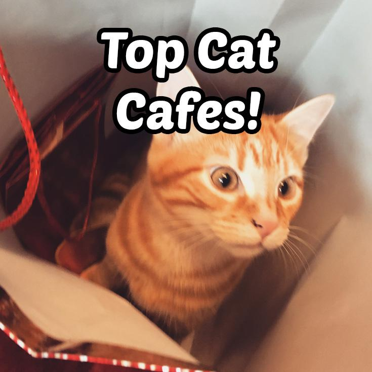 The Top Cat Cafes in The World 2021