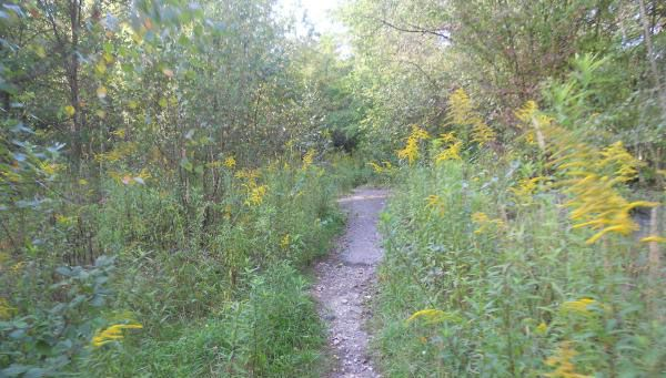 Once past the pond/marsh area, we walked along this path...