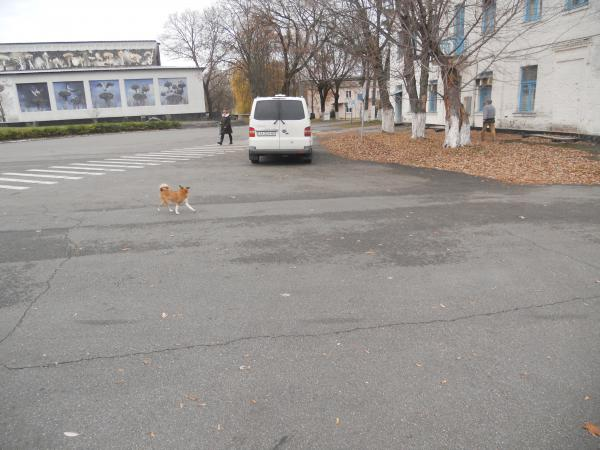 Chernobyl town area - and friendly stray dogs