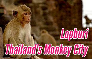 Exploring The Thailand Monkey City of Lopburi (and how to get there from Bangkok)