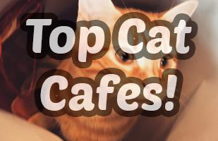 The Top Cat Cafes in The World 2018