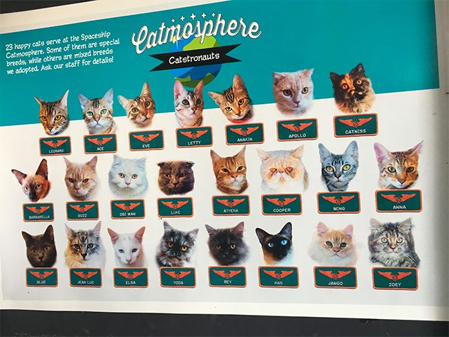 The list of cats at the Catmosphere Cat Cafe