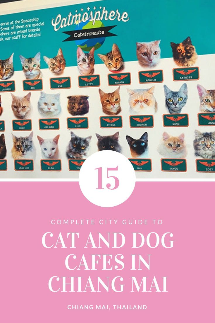 Cat And Dog Cafes in Chiang Mai - Where Is Good, And Where To Avoid If You Love Animals