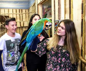 Papugarnia Amazonia - Play with Parrots in Krakow